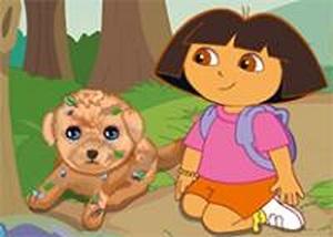 朵拉救助流浪狗